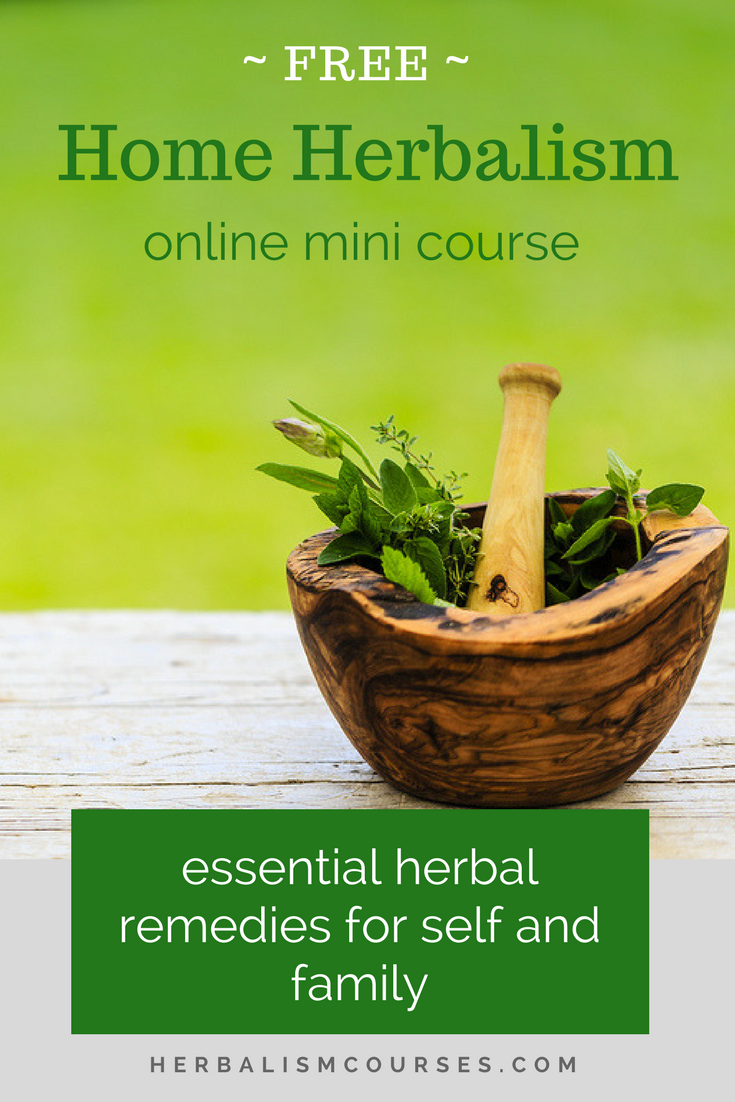 Join this FREE online herbalism course featuring essential herbal remedies for self and family. #herbalism #herbalremedies #herbalcourse #courses #herbs #herbalist