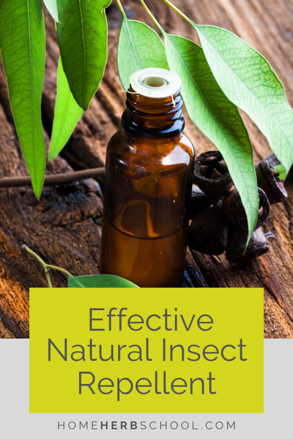 This herbal insect repellent is easy to make and very effective. #Herbalism #HerbalMedicine