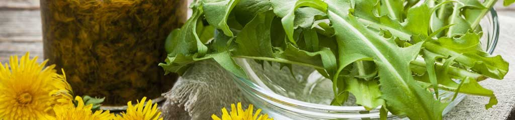 Bitter Herbs for Digestion