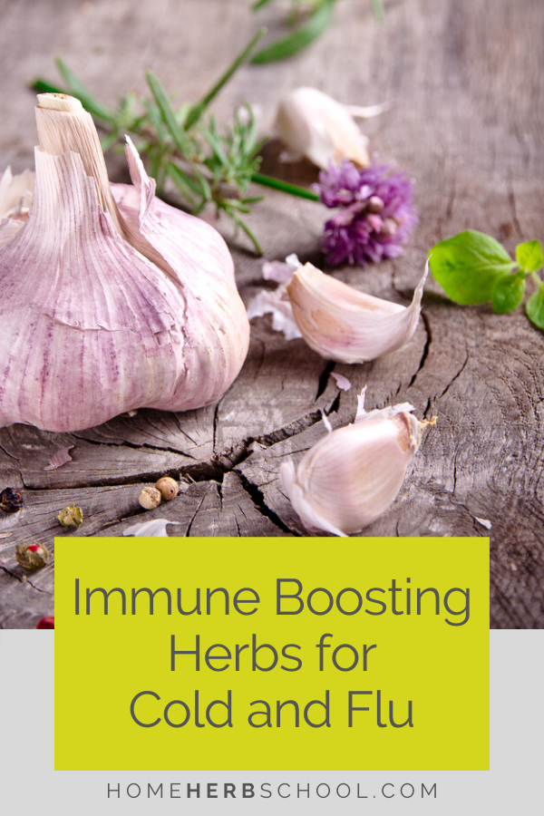 Discover the herbs to prevent colds and flu this winter season. These valuable herbal remedies are an important part of herbalism and home health care. Favorite herbs include garlic, astragalus, echinacea, shiitake mushrooms and elderberry.