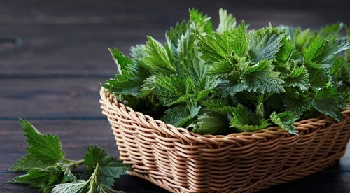 identify medicinal plants