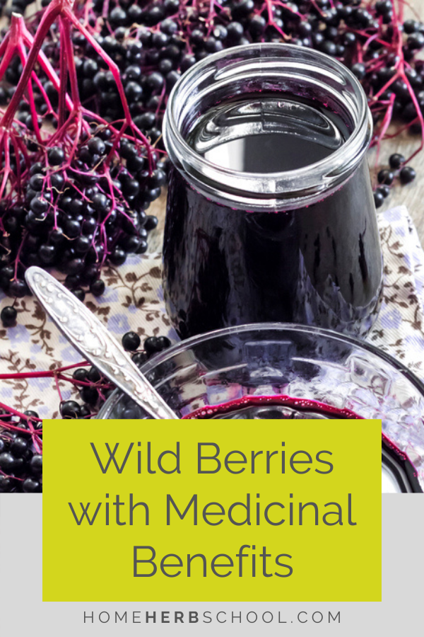 Discover how berries are an important part of herbalism. Favorite berries include elderberry as powerful for colds,  flu and other viruses. Hawthorn is the best herbal medicine for the heart. Wild rose is used for immunity, inflammation, heart disease, cancer, diabetes and cognitive decline.