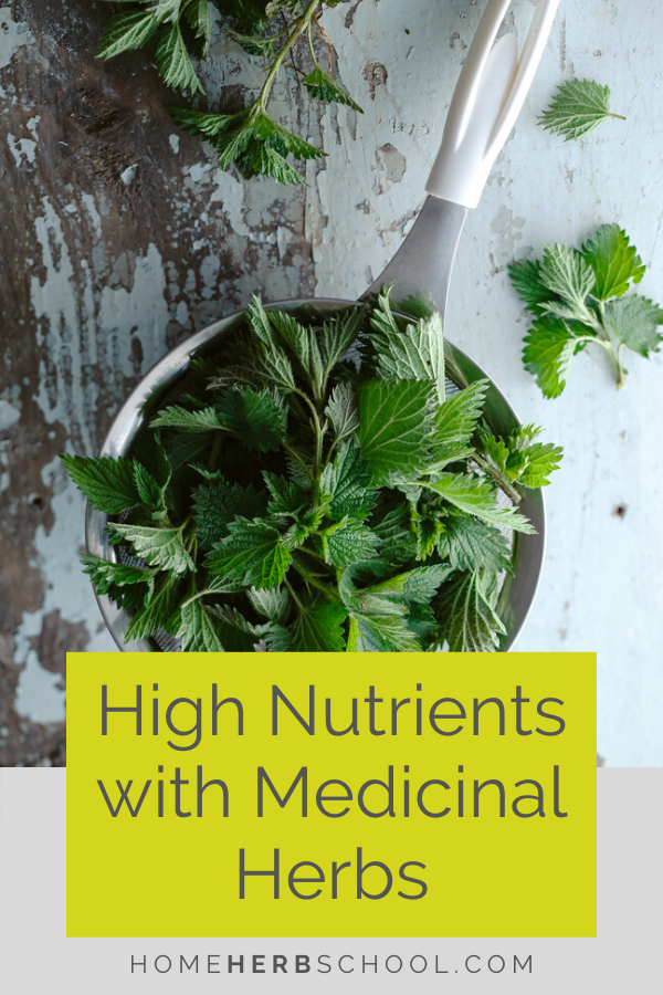 Discover medicinal herbs high in nutrients. These plants are an important part of herbalism as well as nutrition. This herbal medicine is high in iron, magnesium, calcium and potassium as well as protein and many vitamins. Herbs include nettles, dandelion, chickweed, red clover and alfalfa. #OnlineHerbalismCourses