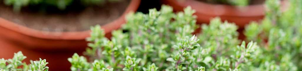 Gardening with Medicinal Plants