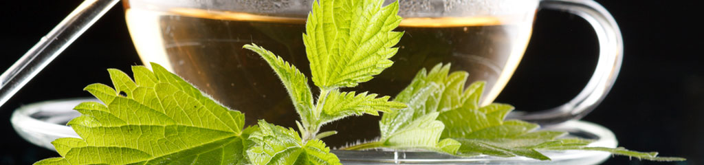 Learn the uses and benefits of nettle tea